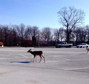 The deer that greeted us as we arrived at our first stop.